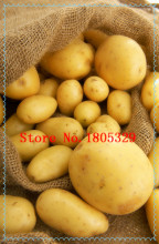100pcs Potato Seeds China Gold Yellow-skinned High-nutrition Potatoes Fruit And Vegetable Seed For Home Garden Pots Plants