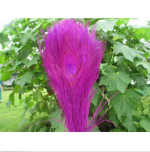 Wholesale 10pcs Featured Quality natural peacock feather eye 25-30cm/10-12inch diy hot Scarce  Decorative rose