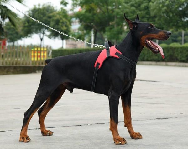 Reflective Pet Dog Harness Padded Soft Comfort Dog Collar | DogsMall-International