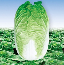 30seeds/bag autumn precocious Chinese cabbage seeds vegetable seeds than the Heat Chinese Academy of Agricultural Sciences