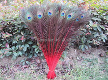 Nature  Good  Free shipping wholesale high quality 200pcs natural  peacock feather 70-80cm/28-32inch  Decoration  diy red hot