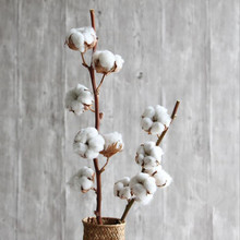 Cotton tree branch country natural cotton tree branch flower flower club club living room wedding shooting props home decoration(China)