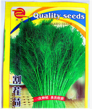 Hot selling 300 pcs /original pack big Stubble fennel, cumin seeds bonsai plant DIY home garden free shipping