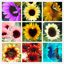 40 pcs/bag sunflower seeds,sunflower painting,bonsai flower seeds,sunflower decorations Natural growth pot plant for home garden(China)