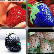 GGG Big sale 500 PCS Red giant Climbing Strawberry Seeds Fruit Seeds For Home & Garden DIY rare seeds for bonsai Free Shipping