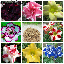 Desert Rose Seeds Balcony Potted Bonsai Plants Adenium Obesum Flower Seeds 14 Color Selectable 1 particle / Bag