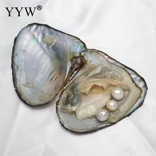 Free Shipping Vacuum-pack Freshwater Oyster Pearls 9-10mm Pearl Mussel Shell with Pearl Inside, For DIY Jewelry Earring Beads