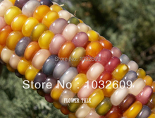 Free Shipping 100pcs Rainbow Corn Seeds Edible Fruit Vegetable Seeds DIY Home Garden Plant FTC007