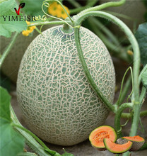 Cantaloupe Seeds, Organic fruit seeds giant cantaloupe melons sweet honeydew melons seeds DIY Home Garden Plant 20pcs/bag(China)