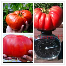 200 GIANT tomato seeds Big Beef Hybrid Tomato Seeds NO-GMO vegetable seeds for home garden planting(China)
