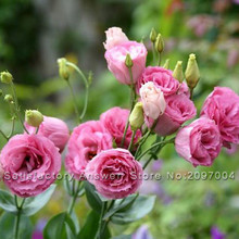 Loss Promotion! 100PCS Red Eustoma Seeds Perennial Flowering Plants Lisianthus for DIY Home & Garden(China)