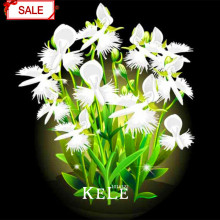 New Seeds 2017!Egret Flower Seeds Perennial Flowering Plants Potted Seeds Interesting Plants 50 Pieces/pack,#VWKN59(China)