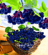 Genuine! 10 Pcs/Bag Annual Fruit and Vegetable Seeds Aronia Viking.DIY Home Garden&Bonsai Seeds.(China)