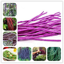 Promotion Sale ! 5 Pcs Mixed Long Bean Seeds Very Easy Interest Mini Garden Gold Hook Organic Vegetable Healthy Graden Plants(China)