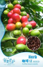 Seeds coffee beans seeds high quality coffee beans 10pcs/bag Original Packing Home Garden DIY Fruit Tree Seeds Free Shipping