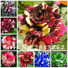 Loss Promotion! 200 Pcs/Bag Tiger Stripes Rose Seeds Rare Bonsai Rosas Flower Seeds New Variety Light up Your Garden
