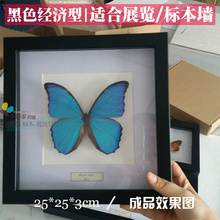 "054 Wholesale 11.7"" 25*25*3 cm insect shadow box with UV blocking glass panel(China)"