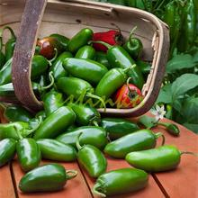 50pcs Jalapeno Chile Pepper Seeds Fast Growing DIY Home Garden Vegetable Plant Seeds Vegetable Pepper Chili Free Shipping(China)