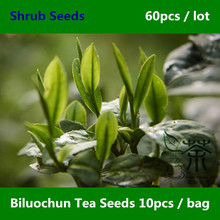 Chinese Dong Ting Biluochun Tea Seeds 60pcs, Widely Cultivated Pi Lo Chun Shrub Seeds, Green Snail Spring Bi Luo Chun Tea Seeds(China)
