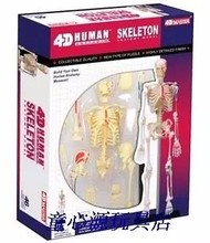 4D MASTER Human 46pcs assembled set model toy skeleton model whole body bone medical use 18.5*5.5*24cm free shipping