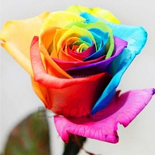 200PCS Colorful Rainbow Rose Seeds Home Garden Plants Multi-color Flower Seeds #H0VH#(China)