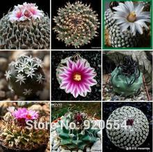 Real seeds,20pcs/lot cactus seed,Turbinicarpus mixed Succulent plant bonsai plant DIY home garden free shipping