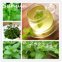 400Seeds/bag NON-GMO Mint Mentha Seeds Fresh Culinary Medicinal DIY Home Garden Plant Easy To Grow Free Shipping(China)