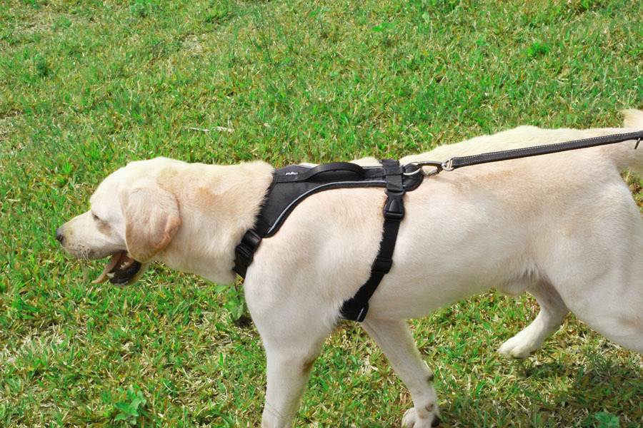 Dog Harness for Large Dogs (8)