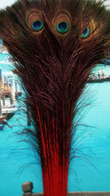 Wholesale perfect  50pcs  high quality natural red Peacock feathers  28-32inch/70-80cm  Decorative diy