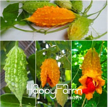 Hot Sale!Vegetable seeds Momordica charantia Bitter gourd, Balsam apple, cucumber, Herbs Family garden 20pcs/Bag #ONPCL1