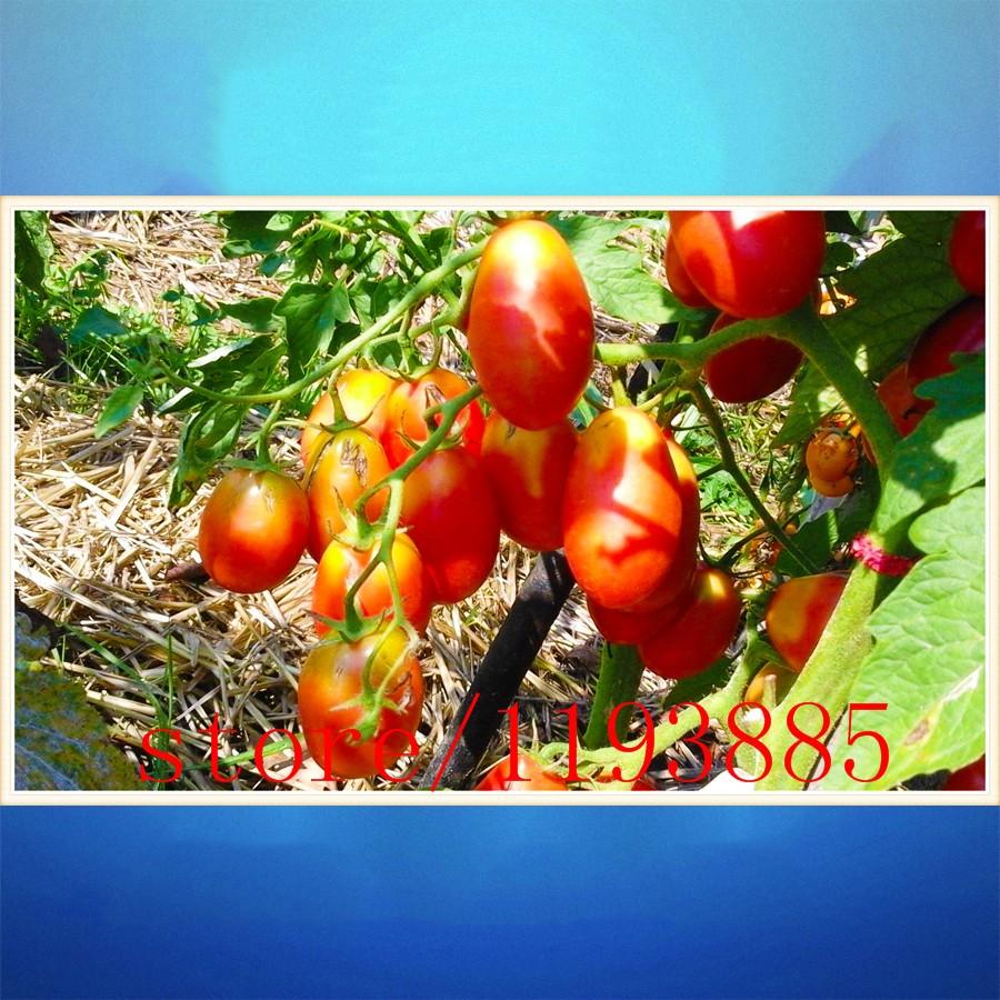 Как заказывать семена томатов по интернету