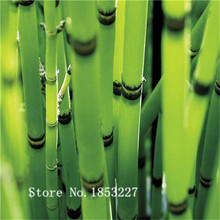 Bonsai bamboo Seeds 50pcs 10kinds mix Flower Seeds Novel Plant for Garden Free Shipping