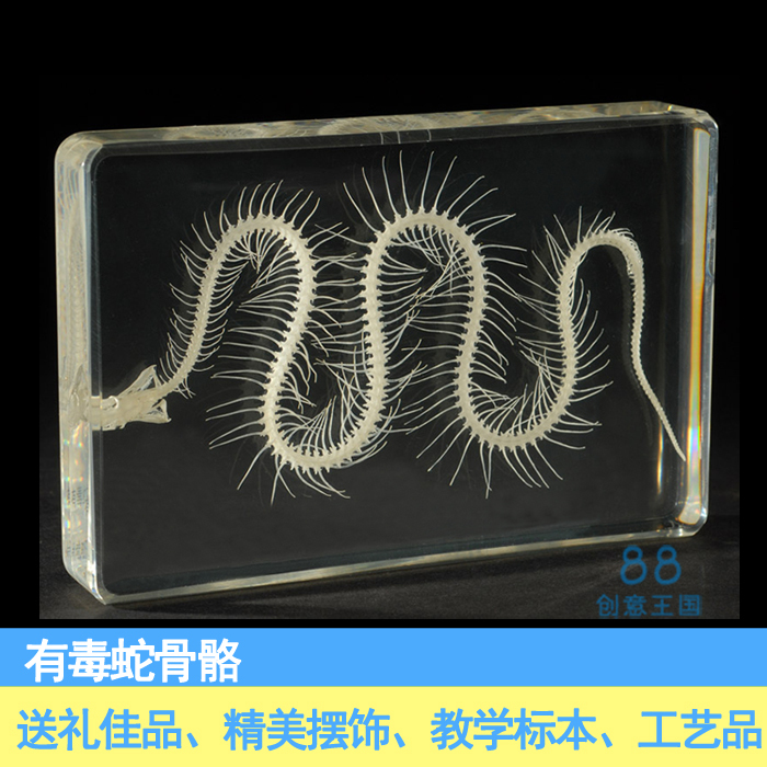 Insect Spider Specimen Embedded Collection Taxidermy Animal Resin Crafts
