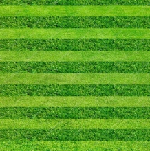 200pcs Lawn Turf Seed Grass Bonsai Seeds Fresh Green Soft Runner Turfgrass Natural Growth For Home Park Soccer Golf Place