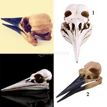 Retro Oystercatcher Resin Skull Head Model Collections Home Bar Decor