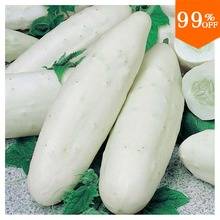 2016 new Very tasty white cucumber seeds,diy vegetable seed for home & garden -100pcs, sent gift -tomato seeds(China)