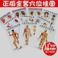 Body acupuncture points chart/human meridian map/human gut map/human skeletal figure/body digest map/head eyes ears foot massage