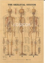 THE SKELETAL SYSTEM Vintage Posters Kraft Paper Painting Wall Sticker Print Art Hospital Classrooms Interior Decoration