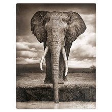 Diy Diamond painting set DRINKING ELEPHANT 30x40CM square diamond resin full rhinestone decoration rhinestone pasted picture zx(China)