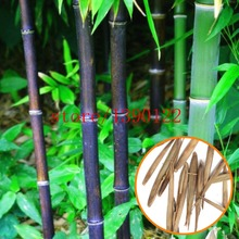 20pcs/bag black Bamboo Seeds,Very Rare Perennial Bamboo Phyllostachys Nigra Nature plants for home garden(China)