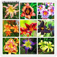 100 Pcs / Bag Hemerocallis Seed Tawny Daylily Potted Planting Garden Flowering Plants Flower Seeds Bonsai Pot Gift Free Shipping