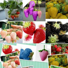 1500 seeds 15 Types of Strawberry Seeds Black, White, Yellow, Blue ,Red, Giant ,Orange,pruple,Green garden fruit plant free ship(China)