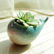 Pocketgarden Ceramic pot Succulent Plants Pot Microlandschaft  Landscape Pot Creative whale shape Flowerpots t001