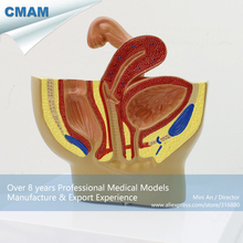 12458 CMAM-ANATOMY20 Female Pelvic Cutway Anatomy Model , Half Life Size, Anatomy Models > Male/Female Models > Pelvis Models(China)