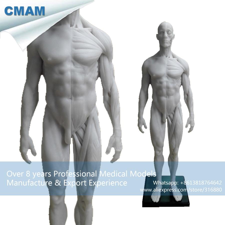 CMAM-PRC41 White Resin 1:6 Human Anatomical Skull Sculpture Head Body Muscle Bone Model <br><br>Aliexpress