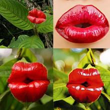 20pcs Sexy Red Lip Flower Seeds Garden Park Yard Plant Psychotria Elata Seeds