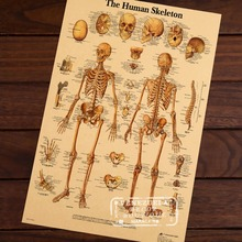 Map of Human Body Skeletal System Classic Vintage Retro Kraft Decorative Poster Maps Home Bar Posters Wall Sticker Decor