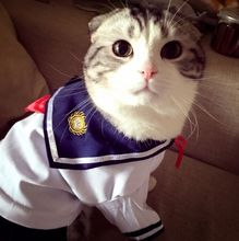 Fashion Summer Cotton Cat Outfit Clothes Cat Dress Pet Kitty Costumes Sailor Uniforms Dressing Up Skirt Pet Supplies D080(China)