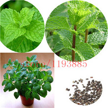 100 pcs spearmint mint seeds edible catnip plant flower seeds vegetable seeds bonsai herb seeds for home garden easy grow