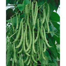Original authentic vegetable seeds pole beans king, green bean seed rack, green pods,about 20 particles/pack h51